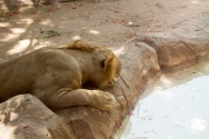 4Jul15_Barranquilla_Zoo-82