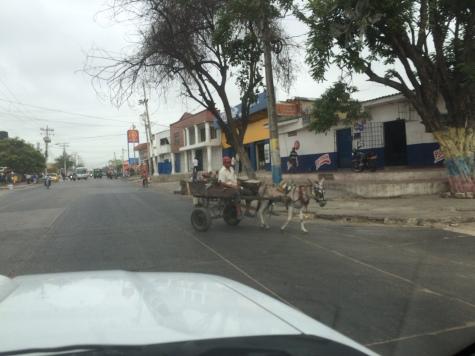 And donkeys