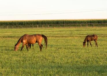 Horses-12