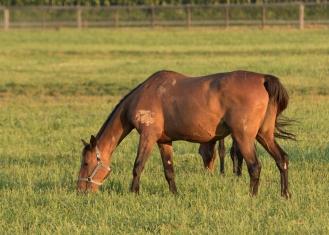 Horses-13