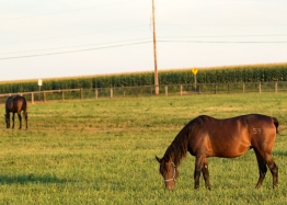 Horses-14