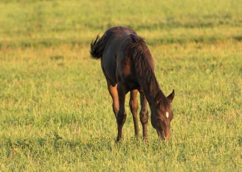 Horses-15