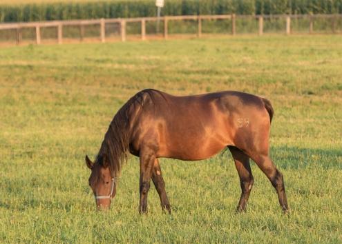 Horses-16