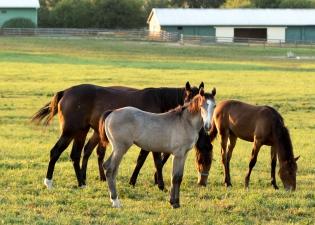 Horses-19