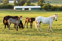 Horses-22