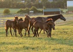 Horses-25