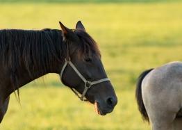 Horses-26