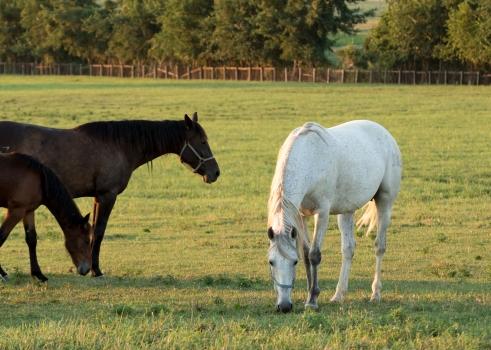 Horses-27