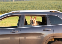 The dog watches from the car as I take pictures