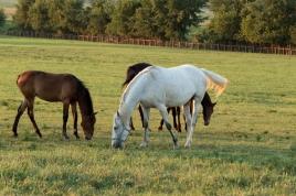 Horses-29