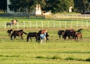 Horses-3