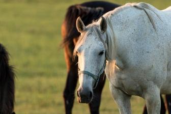 Horses-30