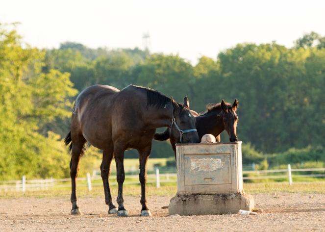 Horses-7