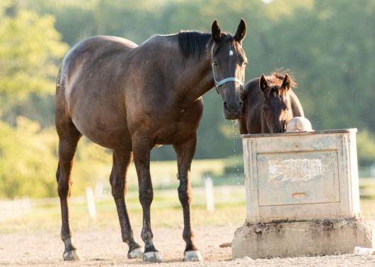 Horses-8