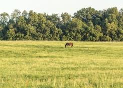 Horses-9