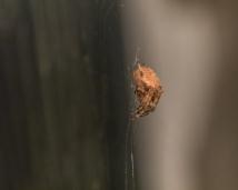 Spider_27AUG15-1