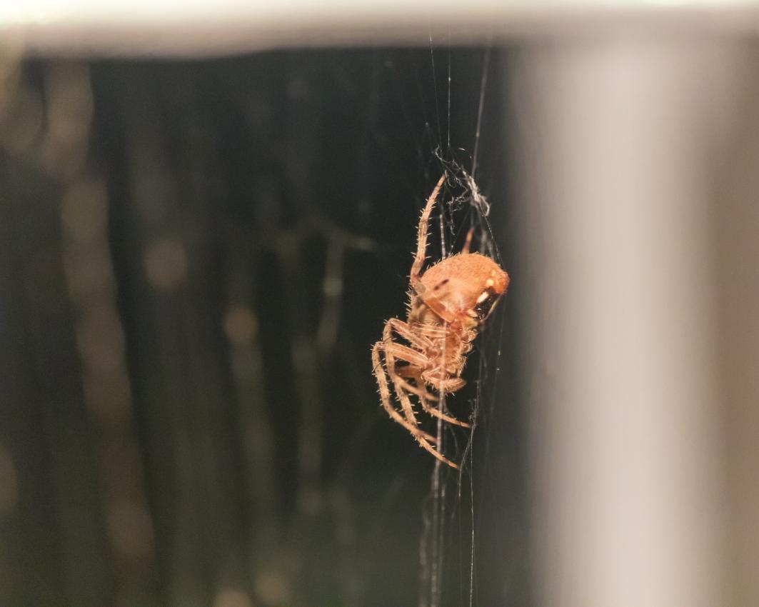 Spider_27AUG15-10