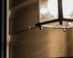 Spider_27AUG15-2