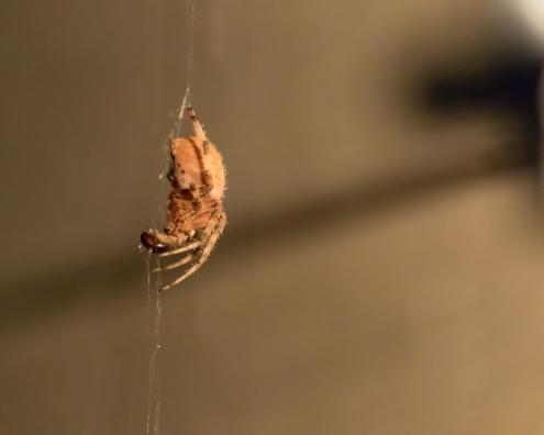 Spider_27AUG15-3