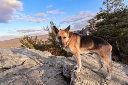 Dog on a high place