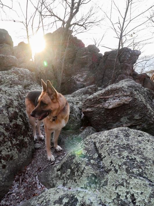 Dog in the sunshine 2