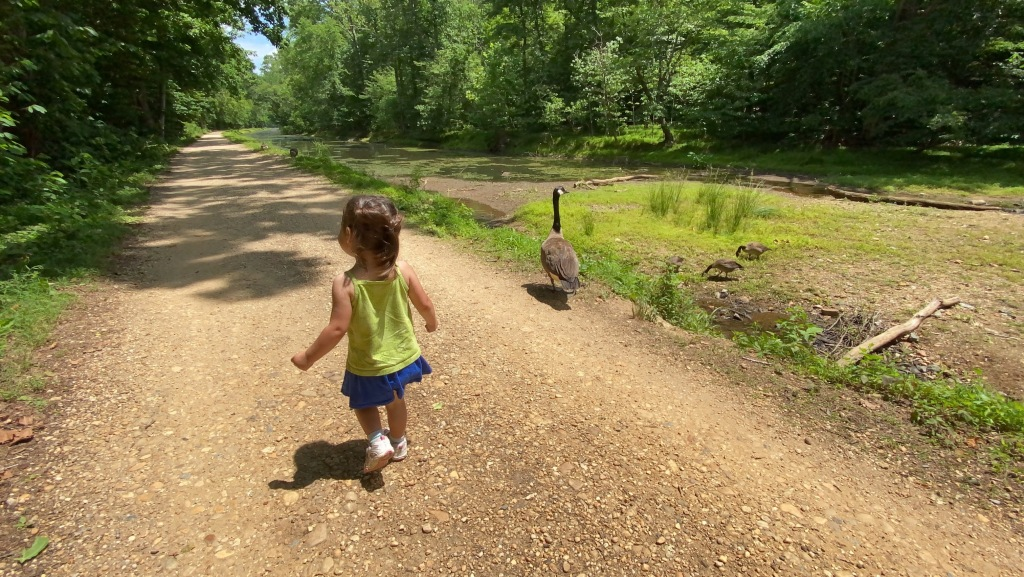 Image of a little girl walking away from the camera alongside a goose by a canal.